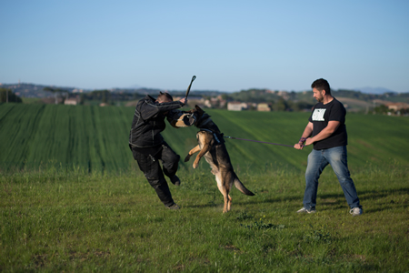 Addestramento utilità e difesa