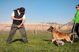 Addestramento cane Perugia