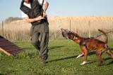 Addestramento cani Perugia