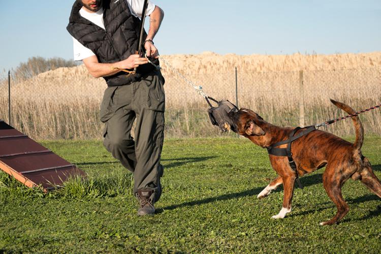 addestramento cani da tartufo perugia italy - photo#17