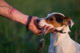 Consulenza cuccioli Perugia